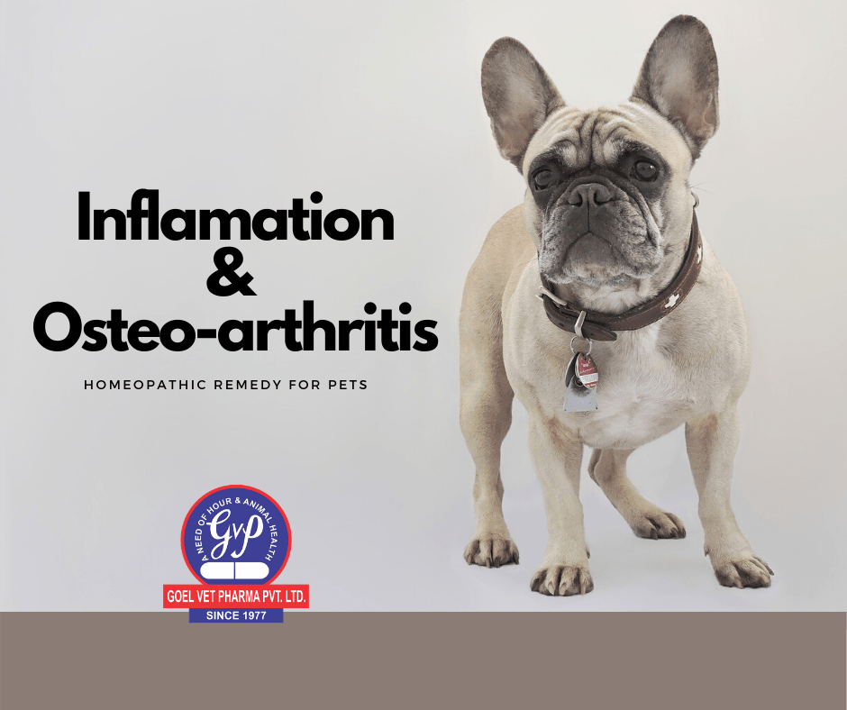Homeopathic Medicine for Dog Inflamation