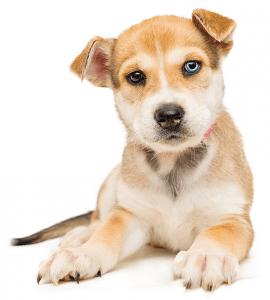 Dog Homeopathic Medicine