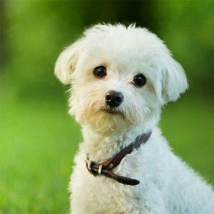 Dog medicine for Stress