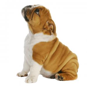 Pet Medicine for Constipation