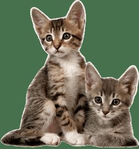 Pet Medicine for Stress