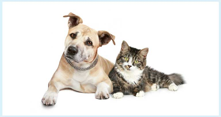 Anorexia In Dogs & Cats FAQs