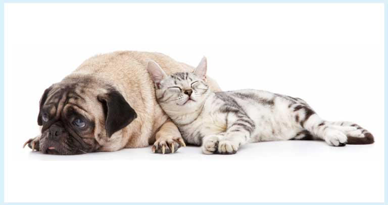 Fever In Pets? Faqs, Management, Homeopathic Remedy
