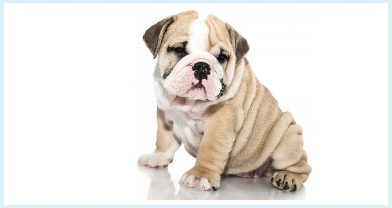 Do You Feel That Your Dog Is Showing Discomfort And Joint Pain : Homeopathy Can Help