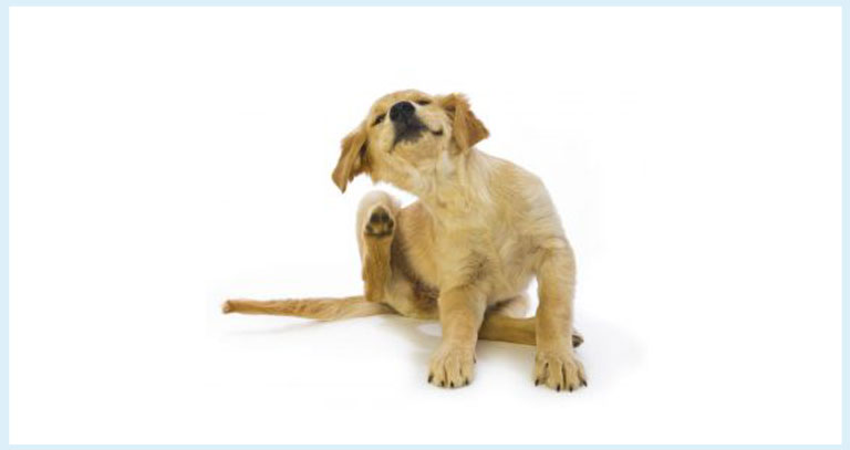DITCH THE ITCH – Canine Atopic Dermatitis FAQ Guide