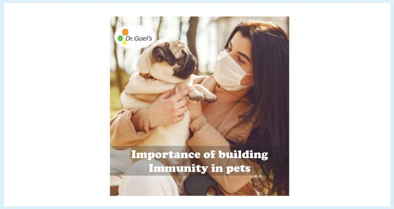 The Importance Of Immunity In Pets