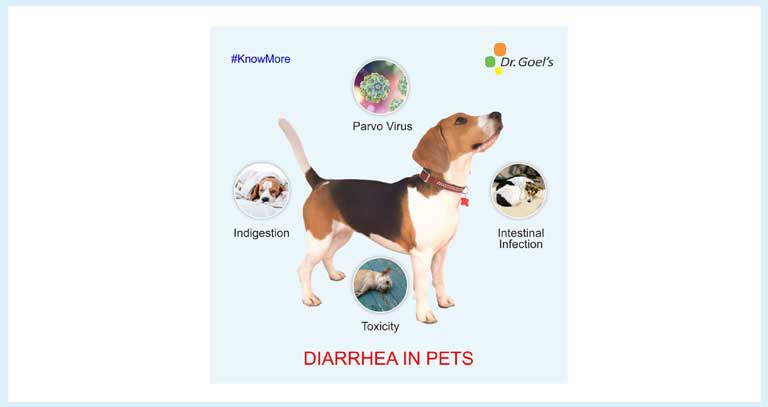 The Parvo Problem & Homeopathy For Pets