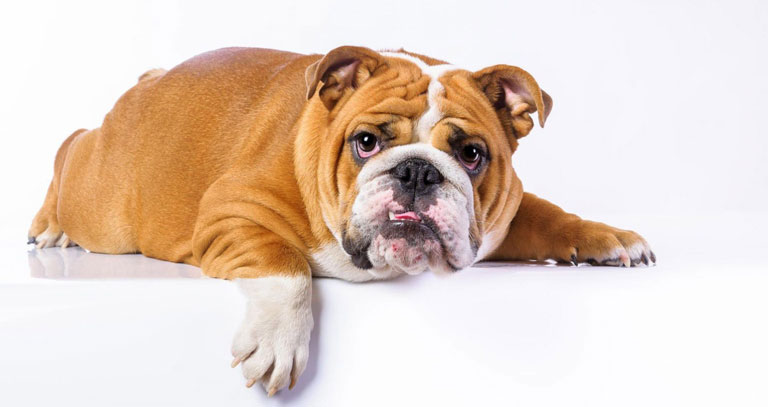 Protect Your Pets From Worms, It's Easy With Side-Effect-Free Medication