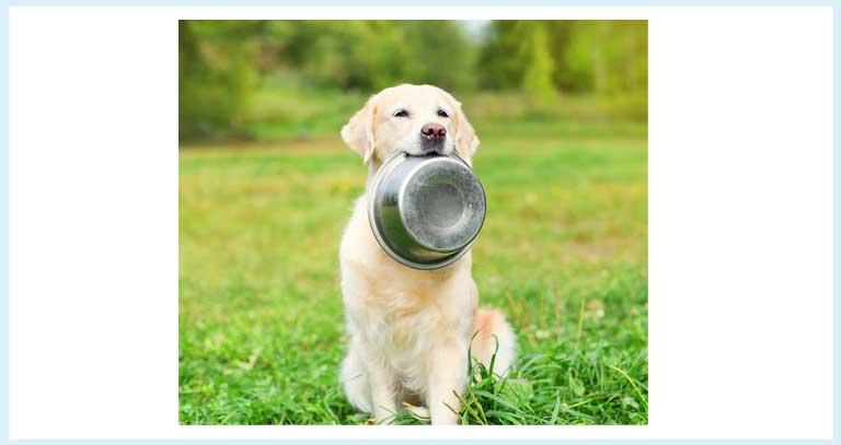 Calcium Supplementation : Strong Bones, Stronger Pet