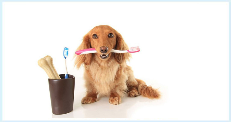 Me & My Orals- Say Bye To Foul Breath & Tooth Decay In Pets
